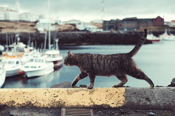 Comment programmer un voyage avec son chat ?